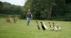 A man learning how to herd ducks on a team building event